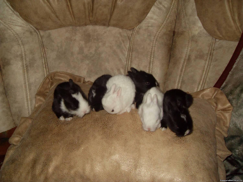 Корм сухой Royal Canin Maine Coon Adult, для кошек